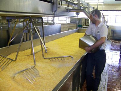 Watch cheese being made